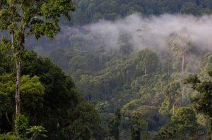 Wild coffee in Ethiopia. Photo:©Laya coffee